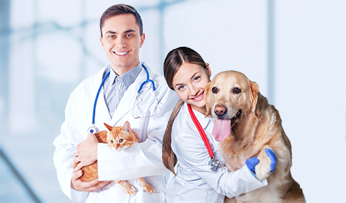 Veterinarians Holding Dog and Cat